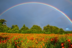 Poppies & rainbow