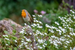 Robin and flowers